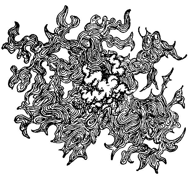 fig 21 colony of bacillus proteus