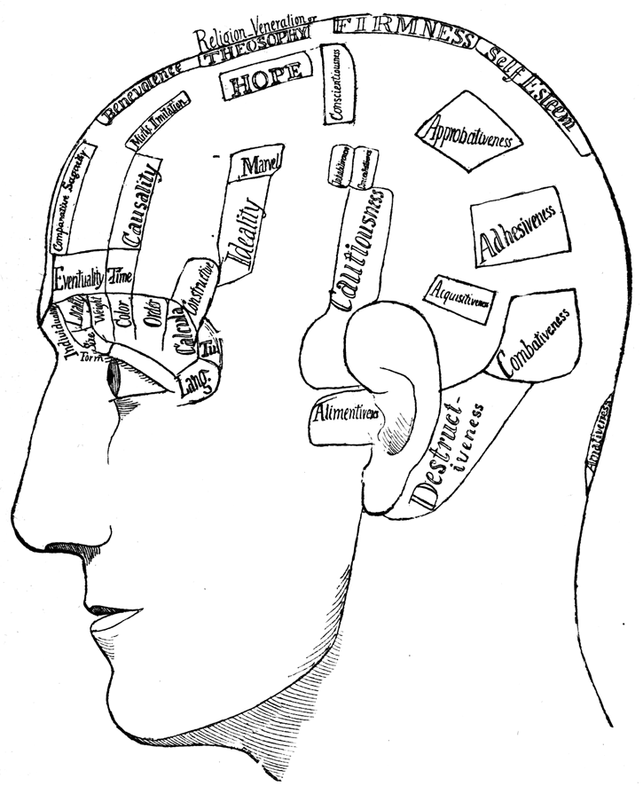 Sketch Of Head In Profile With Areas Named On It
