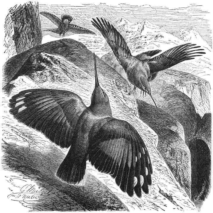zeldzaam vogeltje groningen november