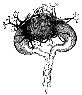 The project gutenberg ebook of fungi their nature and uses by fig 93 fandeluxe Choice Image