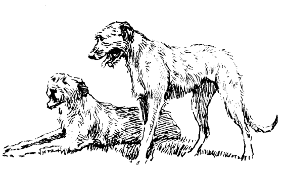 The Project Gutenberg Ebook Of Finn The Wolfhound By A J Dawson