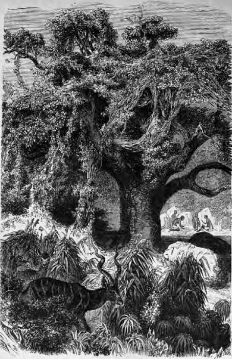 baobab mit schlingpflanzen im vordergrunde agaseen antilopen zeichnung von robert kretschmer - Gelbe Sthle Passen Zu Welcher Kche