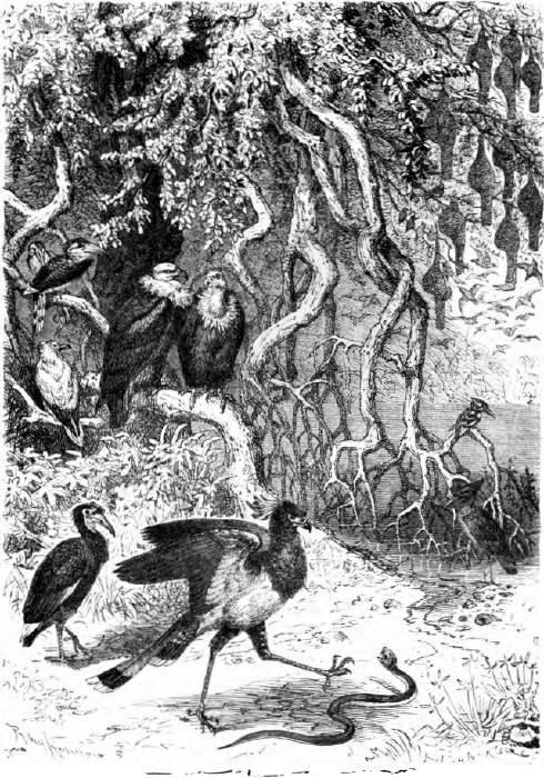 ebook vögel europas