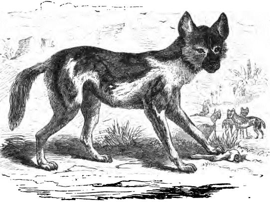hund verliert urin im schlaf