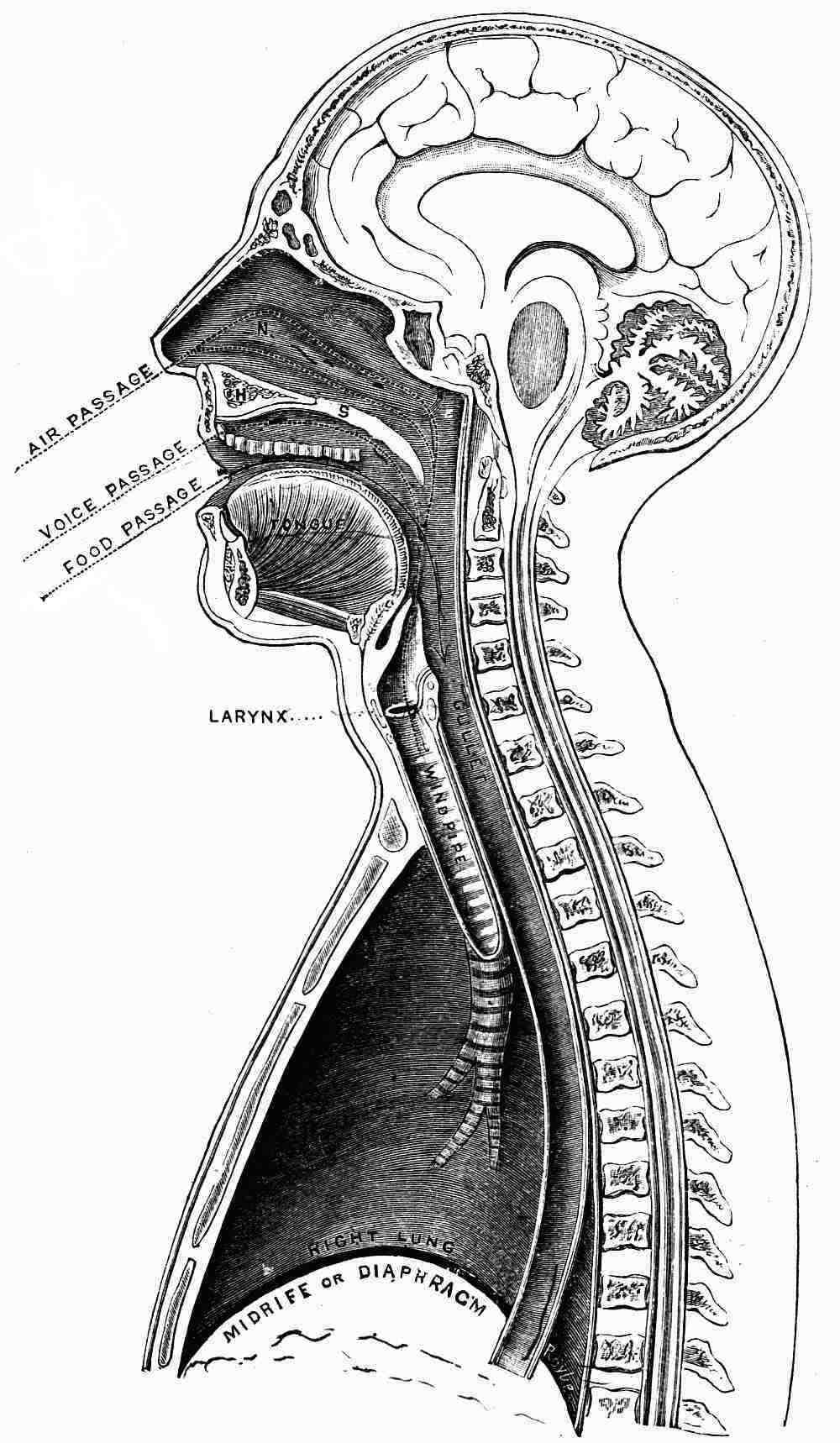 The Project Gutenberg eBook of The Mechanism of The Human Voice, by ...
