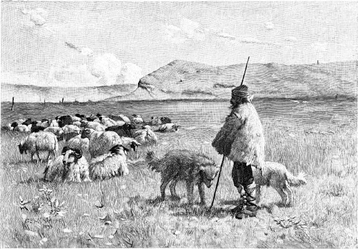 AN ANGORA SHEPHERD.