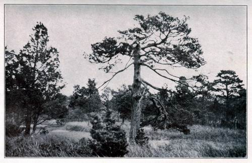 Cedar and Oak to Burn a Witch      Past and present collide in a Cape Cod town