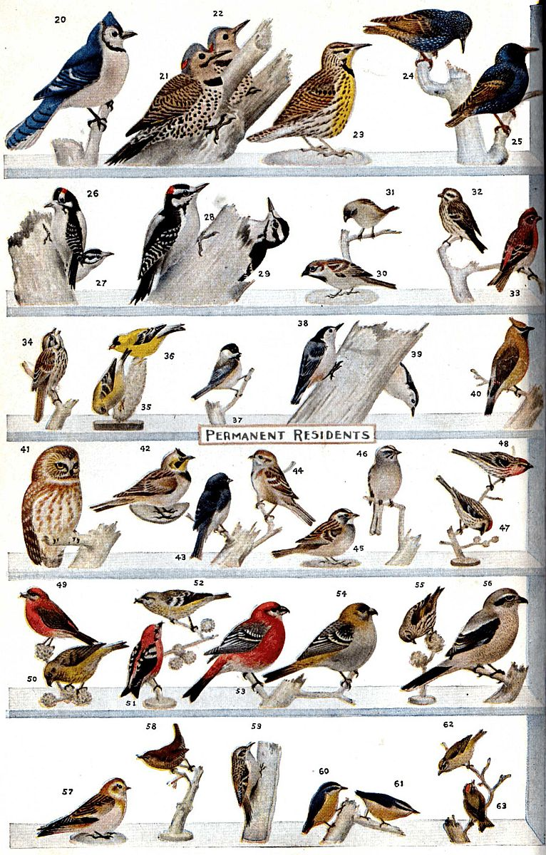 The Project Gutenberg eBook of What Bird Is That?, by Frank M ...