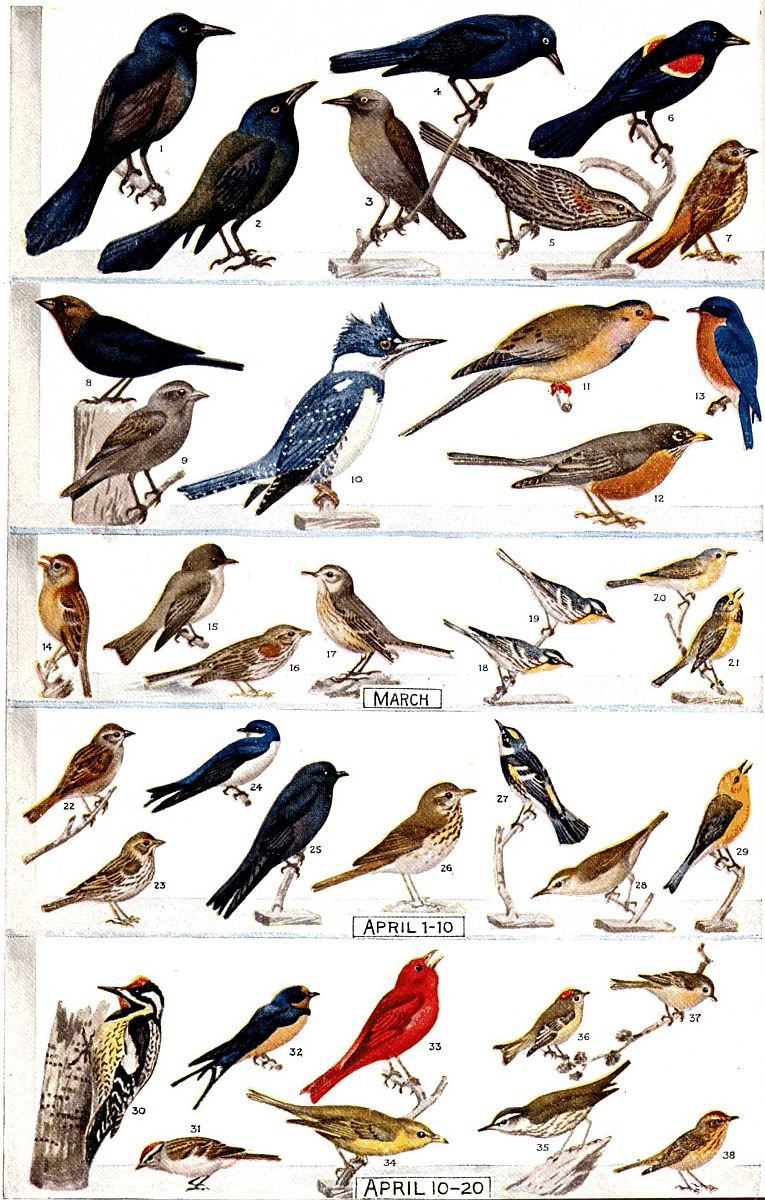 bird of north carolina seebyseeing