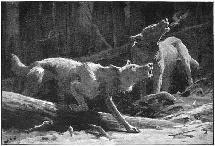 jager schiet wolf