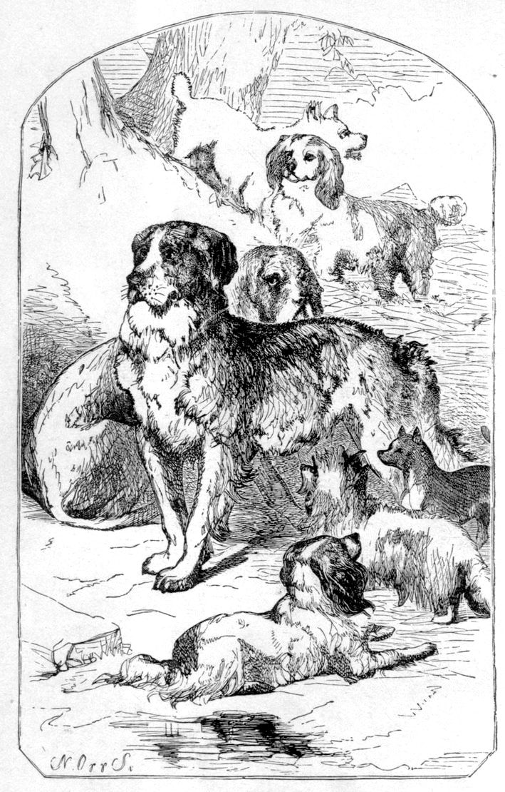 The Project Gutenberg eBook of The Dog, by Dinks, Mayhew, And ...