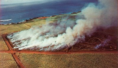 'Sugar Cane Fields Burning' from the web at 'http://www.gutenberg.org/files/33355/33355-h/images/illus-054.jpg'