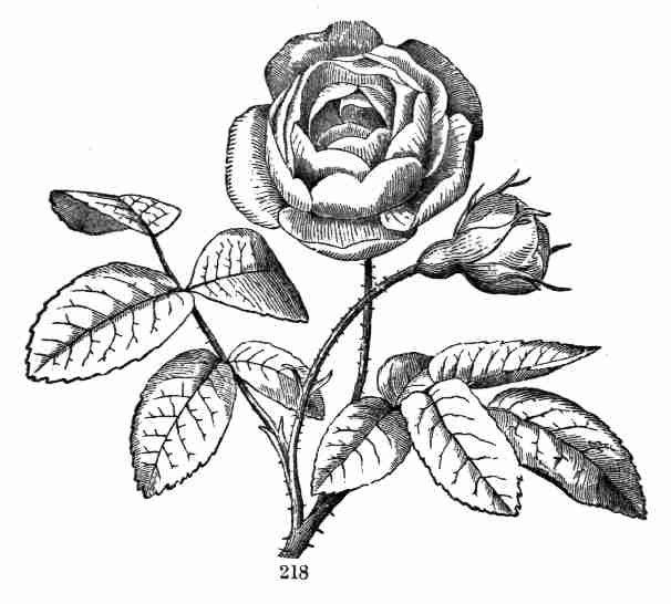 The Project Gutenberg Ebook Of The Elements Of Botany By Asa Gray