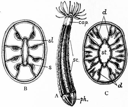 The Project Gutenberg Ebook Of Encyclopdia Britannica Volume Ii