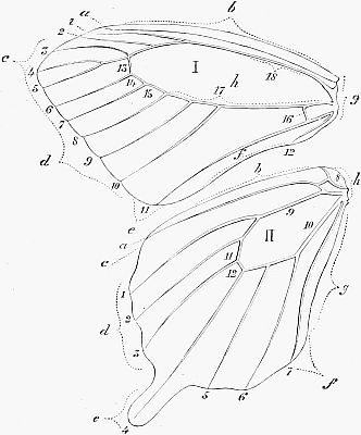 The Project Gutenberg Ebook Of Butterflies And Moths By William S