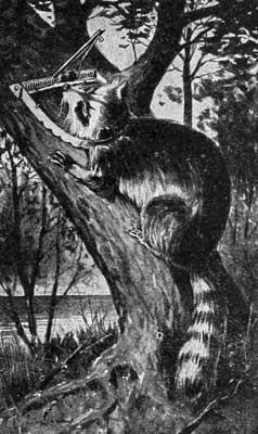 ANIMAL KILLED IN TREE TRAP.