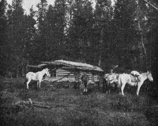 TRAPPER'S CABIN AND PACK HORSES.