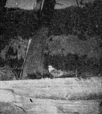 BAIT STEALER--BIRD.