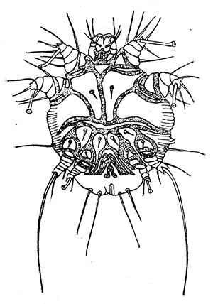 The Project Gutenberg Ebook Of Handbook Of Medical Entomology By Wm