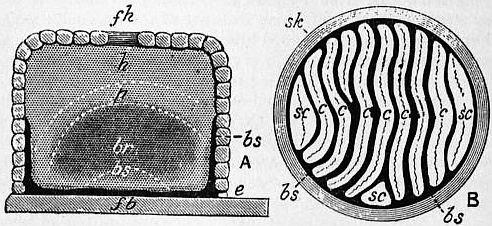 The project gutenberg ebook of encyclopdia britannica volume iii fig 11straw skep in section showing arrangement of combs fandeluxe Image collections