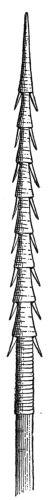 Solomon Islander's spear.