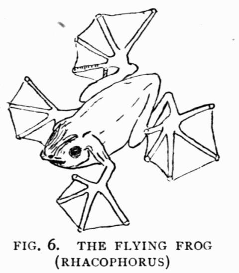 The Project Gutenberg Ebook Of Dragons Of The Air By H G Seeley
