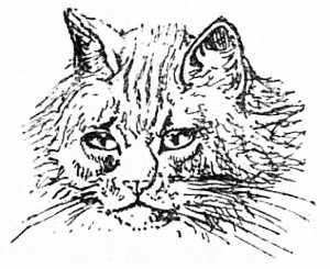 The Project Gutenberg EBook Of Our Cats By Harrison Weir - 35 cats pulling ridiculous faces imaginable