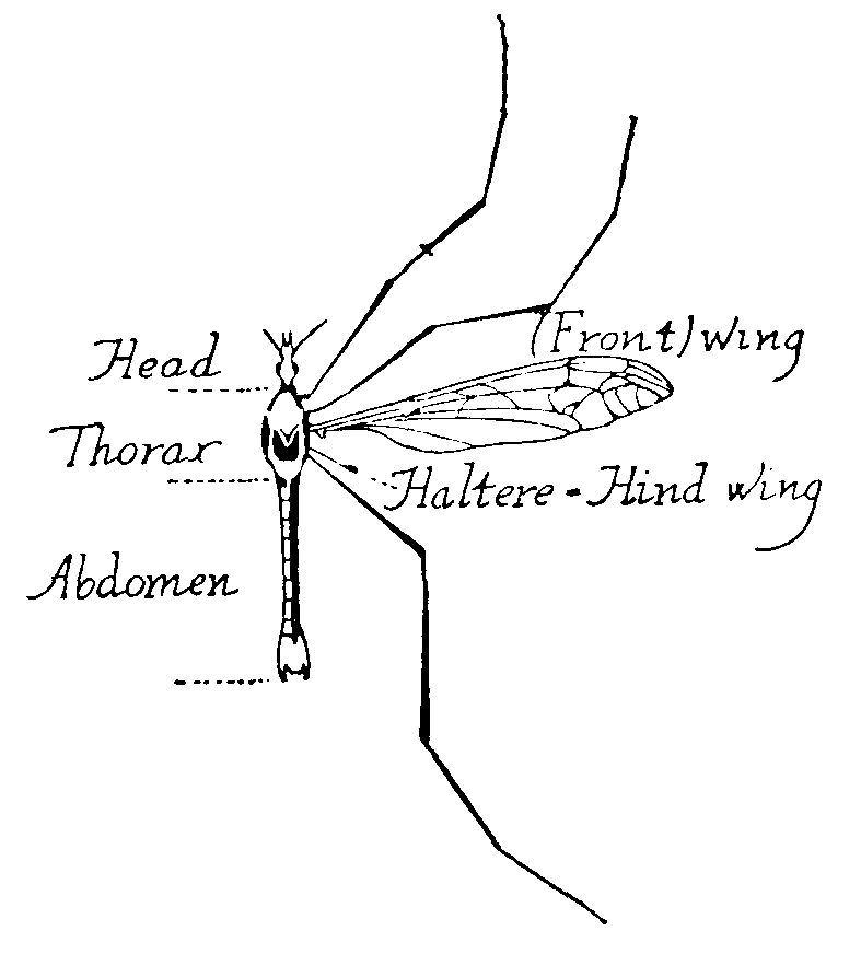 The New Gresham Encyclopedia - Volume IV Part 1. Msg Sawmill E Wiring Diagram on