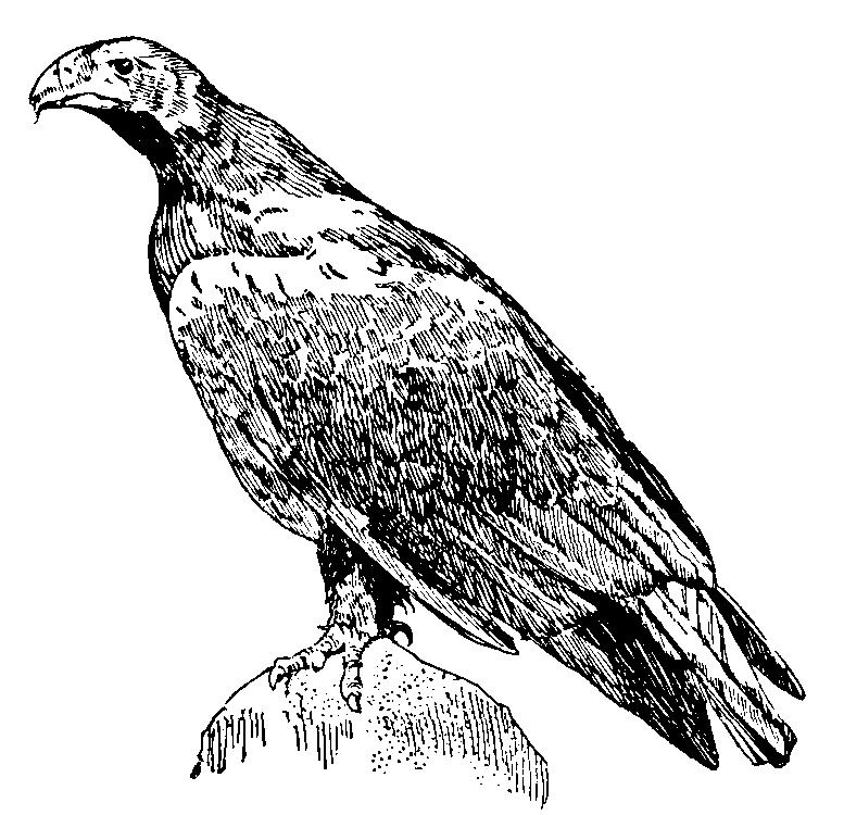 émission aigle imperial