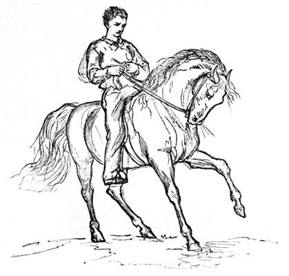 A rough sketch of Laurie taming a horse