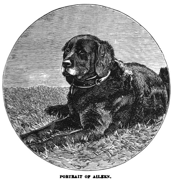 ENGLISH BULLDOG PUPPY TREACLE ADVERT CHARMING DOG PRINT MOUNTED READY TO FRAME