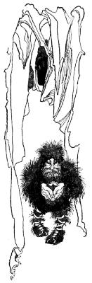 The dwarf stands under a rock archway
