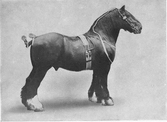 raja story of a racehorse hambleton anne kauffman margaret