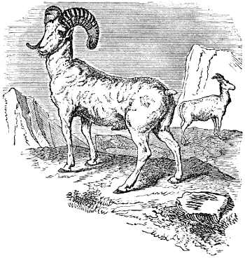 693243734b51b1 The Project Gutenberg eBook of Sheep
