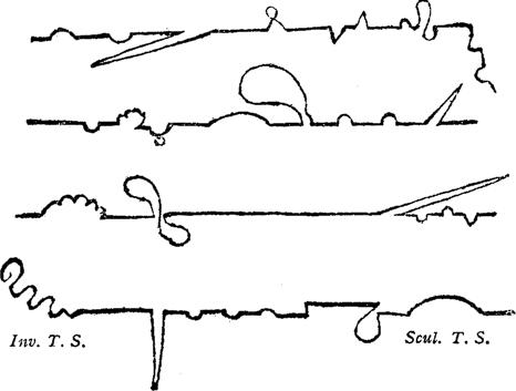 Image result for tristram shandy