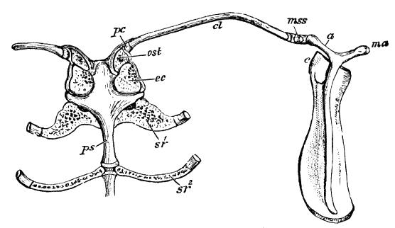 Cambridge Natural History