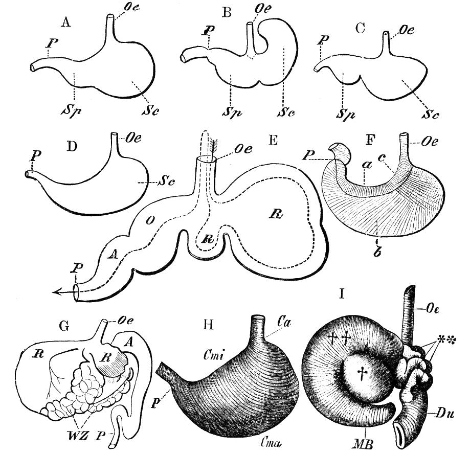 Cambridge Natural History Mammalia