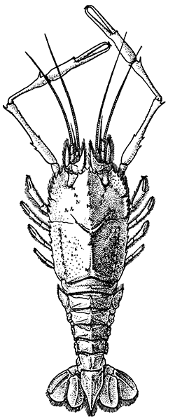 The Project Gutenberg EBook Of Life Crustacea By W T