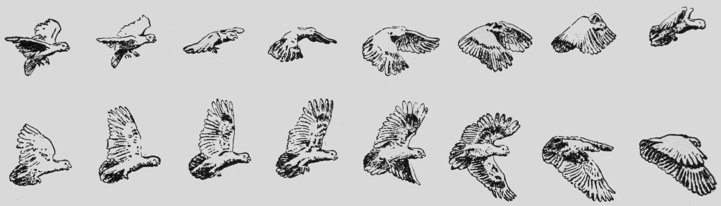 Descriptive Zoopraxography