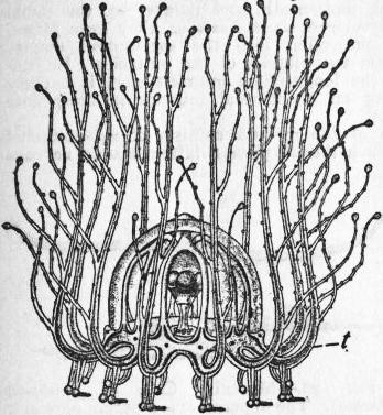 the project gutenberg ebook of encyclop dia britannica volume xiv Lionel Model Trains from allman s gymnoblastic hydroids by permission of the council of the ray society