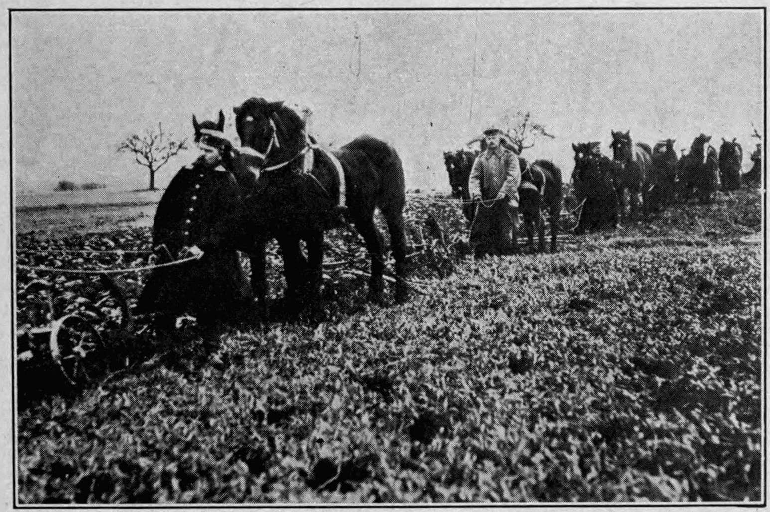 The project gutenberg ebook of the iron ration by george abel schreiner photograph from brown brothers n y german cavalrymen at work plowing as food grew scarcer the nvjuhfo Images