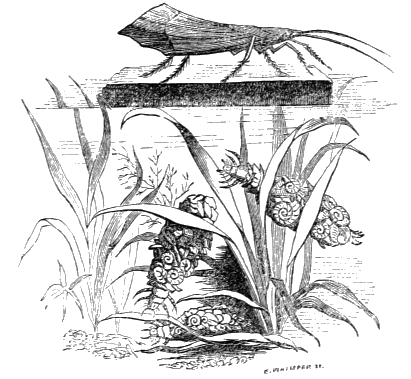 The project gutenberg ebook of the book of the aquarium and water larv and imago of case fly fandeluxe Image collections