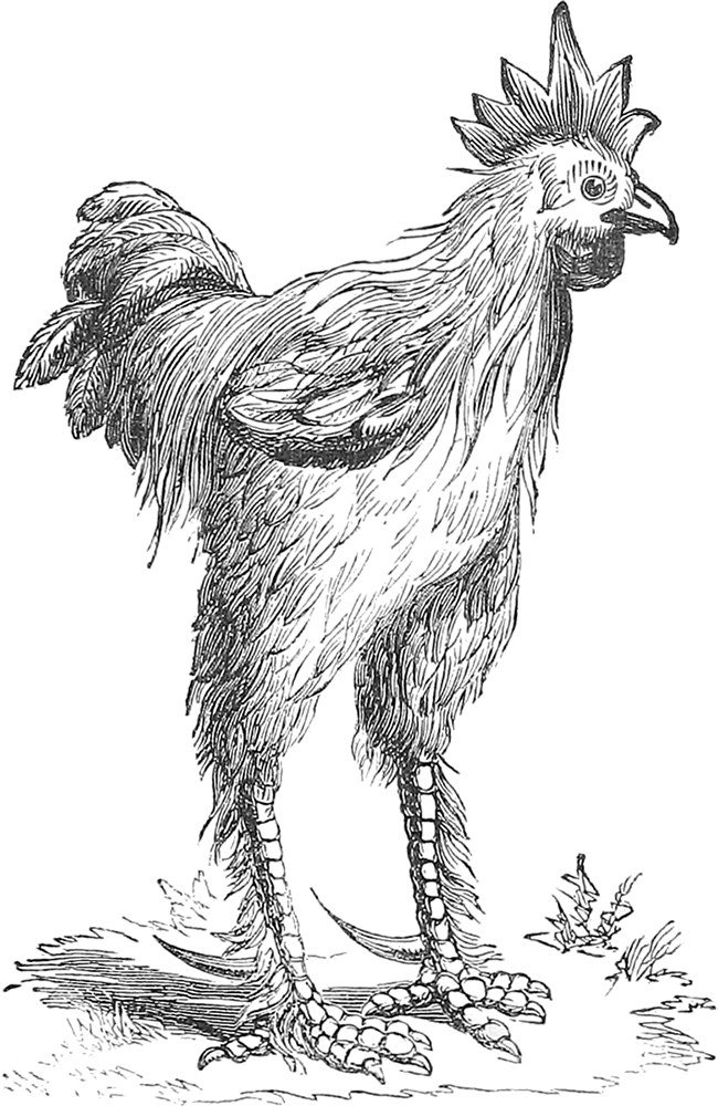 The Project Gutenberg Ebook Of The History Of The Hen Fever By