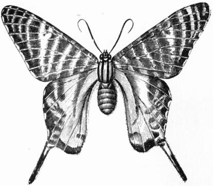 dolfi butterflies decorations romantic butterfly theme.htm the project gutenberg ebook of encyclop  dia britannica  volume xvi  the project gutenberg ebook of
