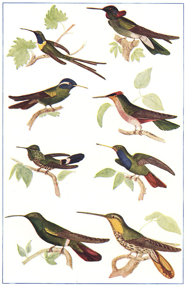 The project gutenberg ebook of the animal world by theodore wood tropical american humming birds fandeluxe Choice Image