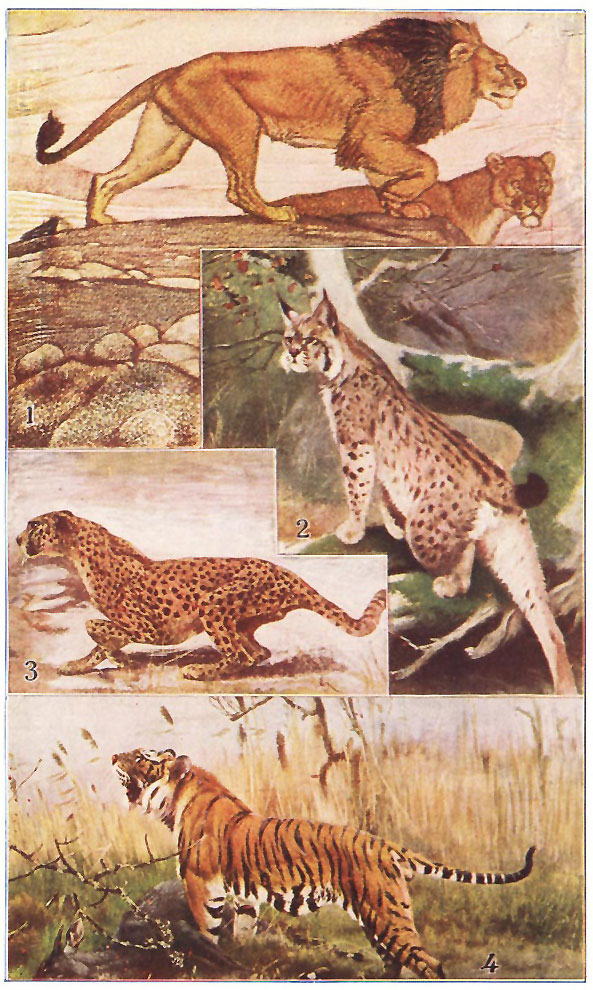 The Project Gutenberg EBook Of Animal World By Theodore Wood