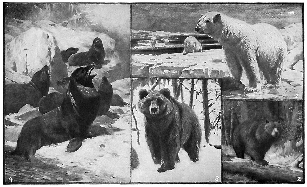 Bear Pumps Straight Ass