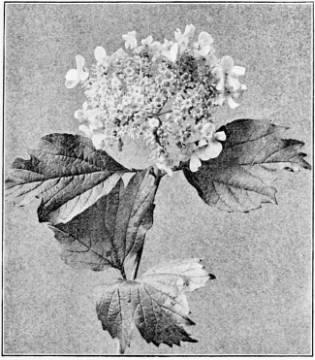 Unisexuality of flower pr events errata