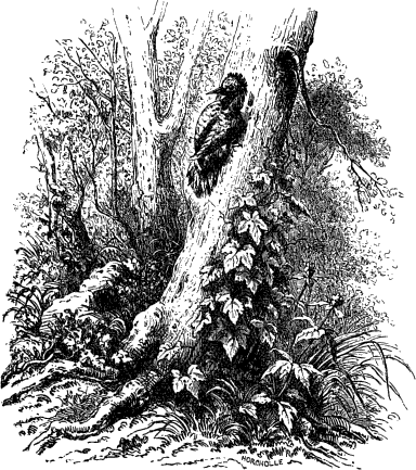 tien geboden plant