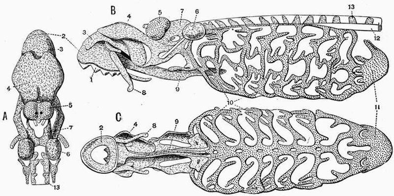 The project gutenberg ebook of the vertebrate skeleton by sidney h the project gutenberg ebook of the vertebrate skeleton by sidney h reynolds fandeluxe Gallery